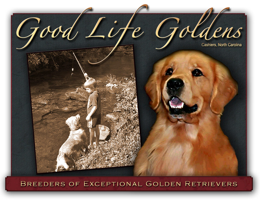 Welcome to Good Life Goldens in Cashiers North Carolina, the Heart of the Blue Ridge Mountains