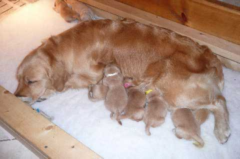 Maxie's 2010 Alphabet Litter consisting of six boys and three girls